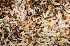 Wild rice grains up close Royalty Free Stock Images