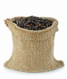 Wild rice Royalty Free Stock Photography