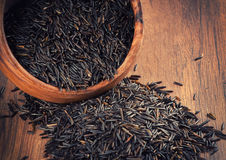 Wild rice Stock Image