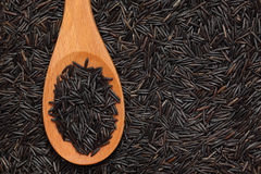 Wild rice in a wooden spoon Stock Photography