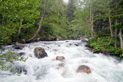 Wild river. A wild river in a forest, Turkey Royalty Free Stock Photography