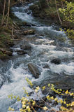 Wild river. Trip in Fagaras Mountains, in may Royalty Free Stock Photography