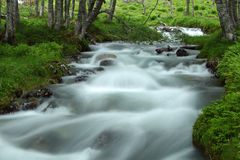 Wild river. In forest, Norway Stock Image