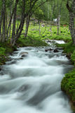 Wild river. In forest, Norway Stock Photos