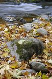 Wild river in autumn Royalty Free Stock Image