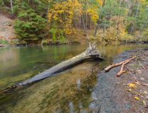 Wild river in autumnal colorful forest Royalty Free Stock Photos