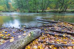 Wild river in autumnal colorful forest Royalty Free Stock Photo