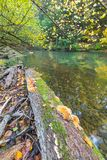 Wild river in autumnal colorful forest Stock Photography
