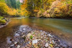 Wild river in autumnal colorful forest Stock Photo