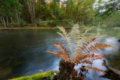 Wild river in autumnal colorful forest Stock Image