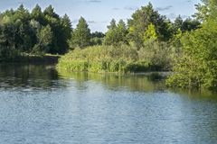 Wild river in deciduous forest Stock Photo