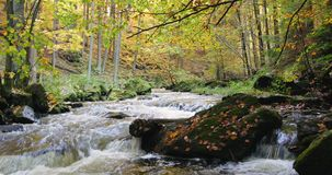 Wild river Doubrava in fall colors, picturesque landscape stock video footage