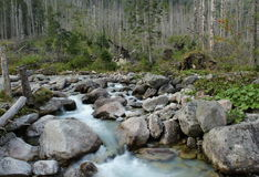 Wild River. That flows beneath the mountains in the forest royalty free stock photo