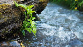 Wild  River Stock Photography
