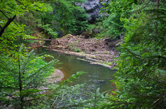 Wild river in the forest Royalty Free Stock Photos