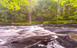 Wild River in Forest Royalty Free Stock Images
