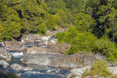 Wild River, Forest Stock Photos