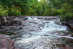 Wild river in the forest Royalty Free Stock Images