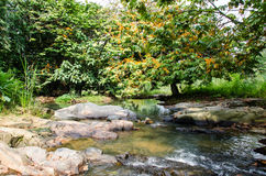 Wild River in green forest Royalty Free Stock Image