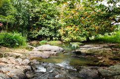 Wild River in green forest Royalty Free Stock Images