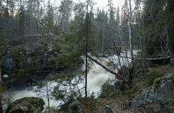 Free Wild River In Forest Early Spring Royalty Free Stock Image - 142465376