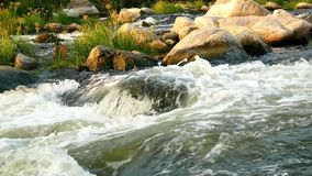 Wild river mountain nature. Wild white river in mountain fores stock video footage