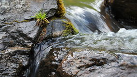 Wild  River Royalty Free Stock Images