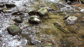 Wild river with stones and audio stock footage