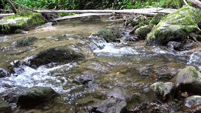 Wild river with stones and branches, audio stock footage