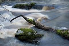 Wild River In Sweden Stock Photos