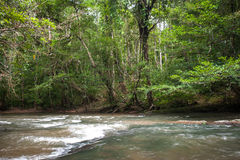 Wild river in Tropical rain forest with green trees Stock Image