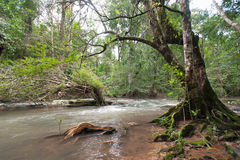 Wild river in Tropical rain forest with green trees Royalty Free Stock Photos