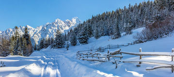 Wild road and the fence. In winter Stock Photography