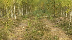 Wild road in the national wildlife reserve. Autumn daytime. Smooth dolly shot.  stock footage