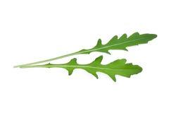 Wild rocket leavesArugula isolated on white. Backbground Royalty Free Stock Images
