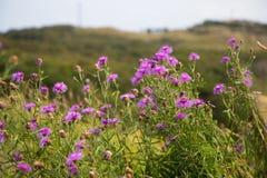 Wild rocky coast on western Sweden. Kullaberg - Wild rocky coast on western Sweden Royalty Free Stock Image
