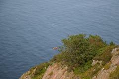 Wild rocky coast on western Sweden Stock Photo