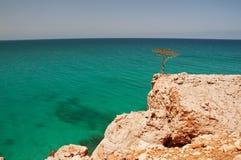 Wild rocky ocean and lonely trees. Yemen. island of Socotra. stock image