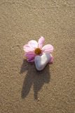 Wild rose on the beach with a heart shaped rock. Wild rose on the sandy beach with a heart shaped rock symbolizing love stock photo