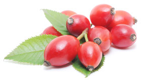 Free Wild Rose Berries Stock Image - 36132031