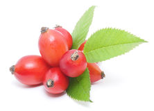 Wild rose berries Stock Photos