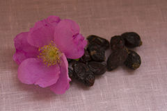 Wild rose with dry berries on the linen cloth Royalty Free Stock Photography