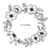 Wild rose flower frame flower drawing and sketch. Wild rose flower frame flower drawing and sketch with line-art on white backgrounds Stock Image