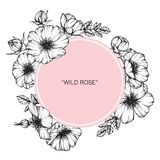 Wild rose flower frame flower drawing and sketch. Royalty Free Stock Photography