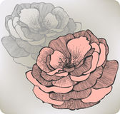 Wild rose flower, hand-drawing. Vector illustratio Royalty Free Stock Photography