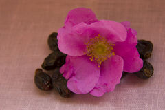 Wild rose flowers and berries Stock Image