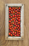 Wild rose hips in small window frame Stock Image