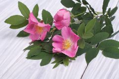 Wild rose pink flowers on a wooden Stock Photos