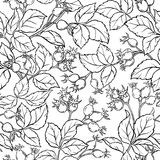 Wild rose seamless pattern. On white background Royalty Free Stock Images