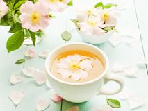 Wild rose tea. Wild dog rose tea and flowers on wooden background. Shallow dof stock photography